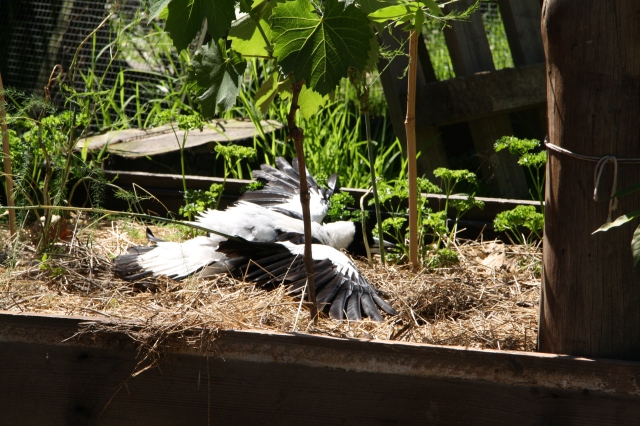 Weekend Wrap Around The Mulberry Tree