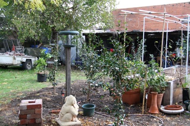 Camellia Planting