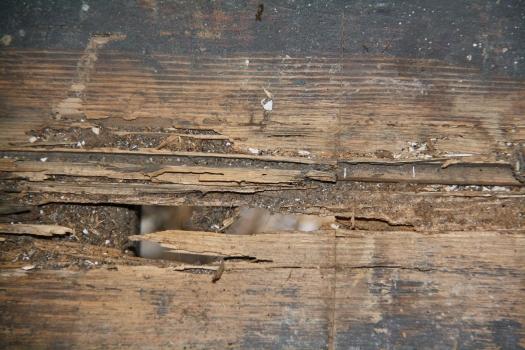 Borer boards damage