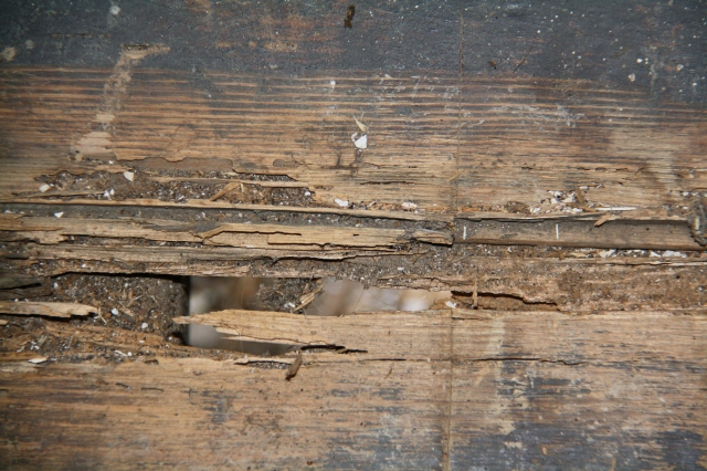 Borer boards damage