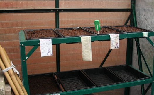 Sproutwell seed trays