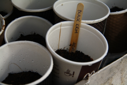 Potted Coffee cups