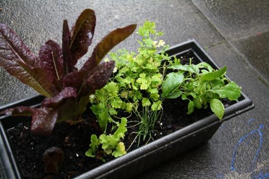 Camping salad herb pot