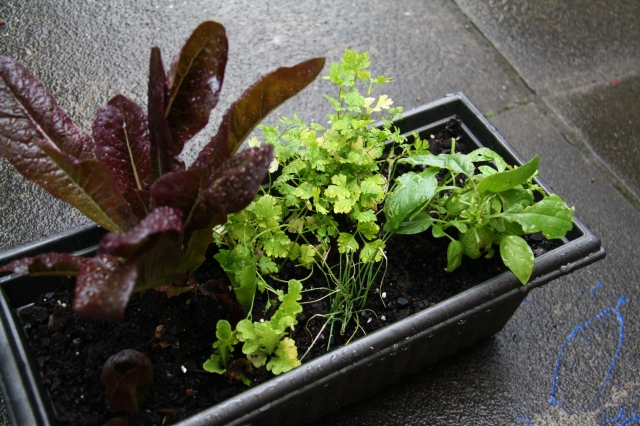Camping salad herb pot