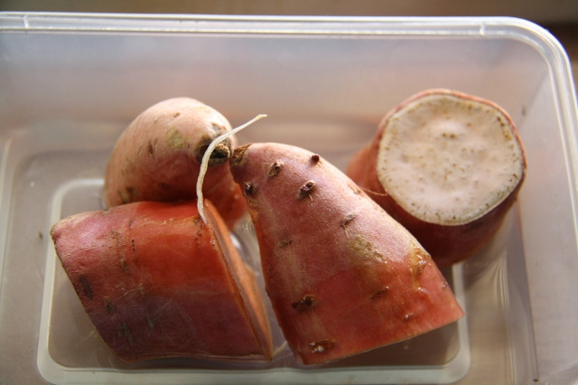 Sweet potato cuttings