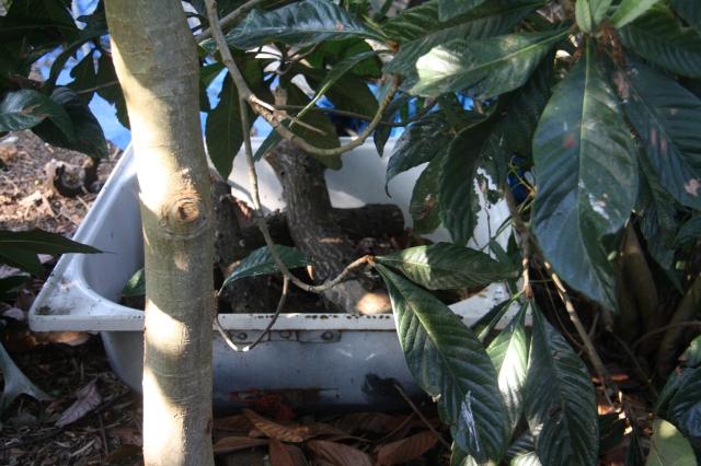 Shiitake bath