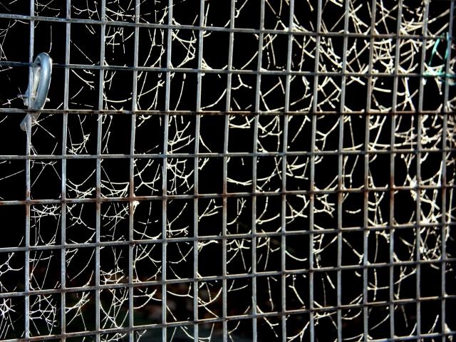 Gate cobwebs