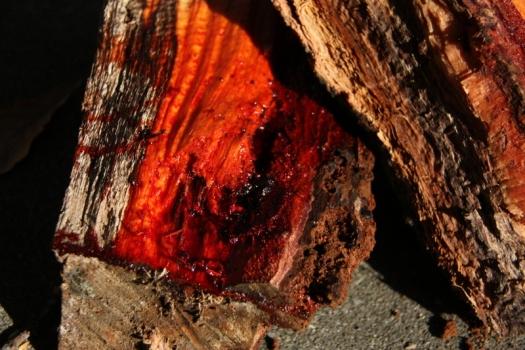 Gum Tree blood sap