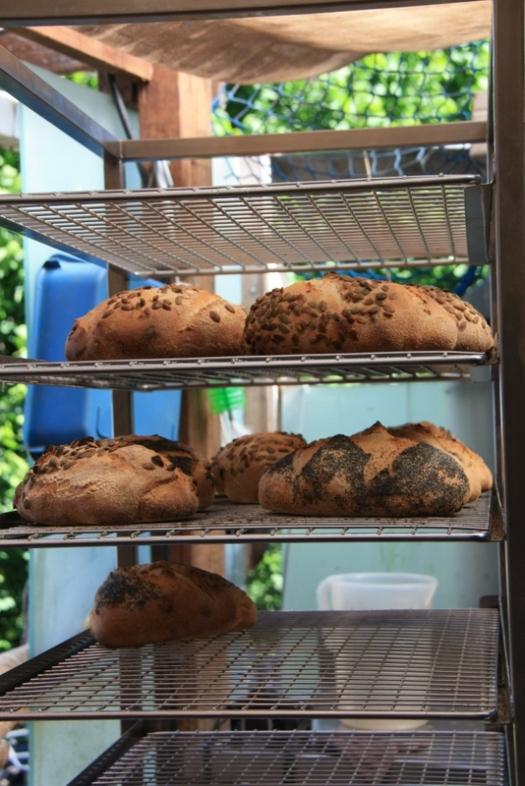 Sourdough loaves.