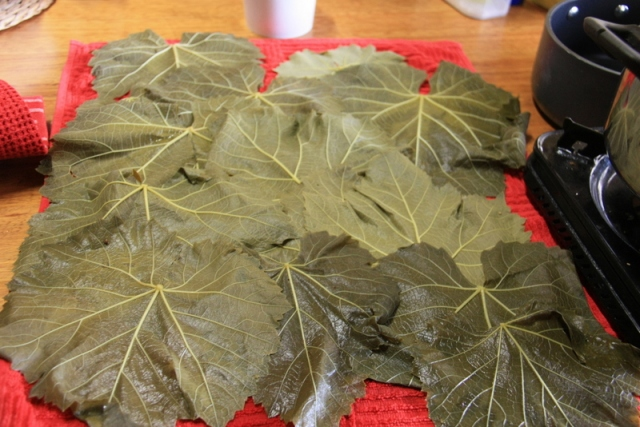 Blanched vine leaves