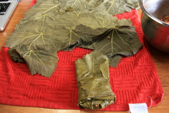how to roll stuffed vine leaves