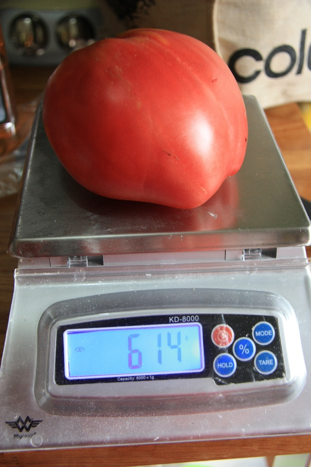 Hungarian Heart huge tomato