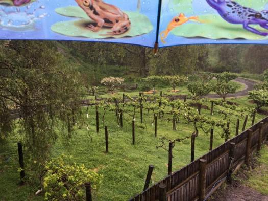 Collingwood Childrens' Farm