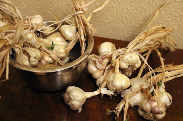 Garlic sprouting